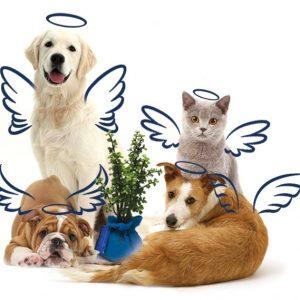 Servicio de Cremación de Mascotas Plus